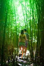 Walking Through the Maui Bamboo